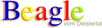 Beagle vom Deistertal